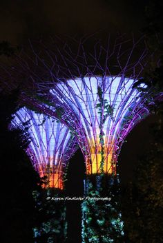 Night Photography: Supertrees - Gardens by the Bay, Singapore  by Karen Findlater Photography