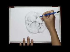 Drawing a first upper molar... by Vassnia Nizama - YouTube