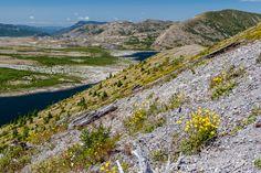 Mount St Helens National Volcanic Monument - Spirit Lake from Windy Ridge  NF 99