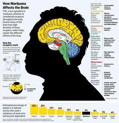 How marijuana affects the brain *Infographic*