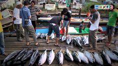"""欧洲鯷鱼的赞扬-""""在市场选择 """"""""小鱼""""""""而不是大鱼意味着为保护海洋生态环境做出贡献。连耶稣也要面临这个问题并以他的方式解决。#2015米兰世博##欧洲##鯷鱼#"""