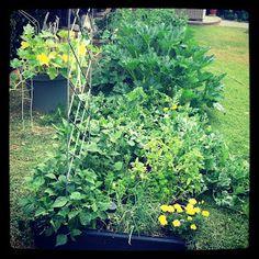 Avah Ham: 10 short/ easy Steps to Organic Gardening