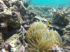 Bucear en Omán (En el paraíso de las Islas Al Dimaniyat)