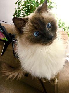 My blue eyed beauty! http://ift.tt/2yDQzMz