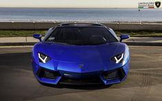 "gorgeous V12 bull in ""Blu Nethuns"""