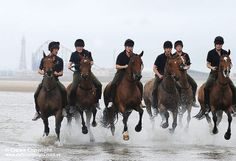 A group of horses and soldiers from The King's Troop Royal Horse Artillery are pictured enjoying a break from the rigours of ceremonial duties, during a week in Blackpool.