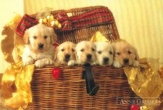 All I want for Christmas is five golden puppies. Cute Puppies, Dogs And Puppies, Doggies, Dog Pictures, Cute Pictures, Animals Beautiful, Cute Animals, Christmas Puppy, Merry Christmas