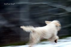 Jack Bauer (13 years old) running on the little snow and having fun anyway!!!!!!  I use to take one hundred shots to choose just a few. These ones are completely unfocused but are very dynamic with a interesting effect :-)  He runs so fast that it's di http://thejobsfor13yearolds.com/summer-jobs-for-13-year-olds/  http://thejobsfor13yearolds.com/babysitting-jobs-for-13-year-olds/