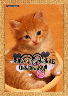 Wednesday Graphics and GIF Animation for Faceboook Wednesday Morning Greetings, Wacky Wednesday, Wonderful Wednesday, Moving Pictures Gif, Funny Pictures, Kittens Cutest, Cats And Kittens, Family Quotes, Happy Day