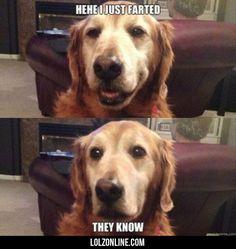 Heheh I Just Farted #lol #haha #funny