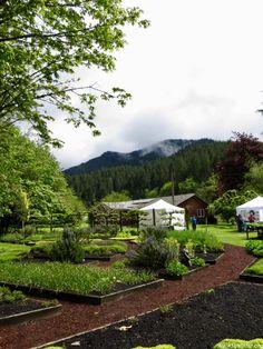The Thyme Garden in Alsea, Oregon. A organic herbal garden with hiking trails. Oregon Flower, Flower Farm, Hiking Trails, Farms, Herbalism, Organic, Places, Garden, Flowers