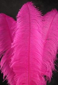 hot pink feathers