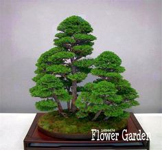 Best-Selling!10 Pieces/Pack juniper bonsai tree potted flowers office bonsai purify the air absorb harmful gases,#Q9VSED #Affiliate