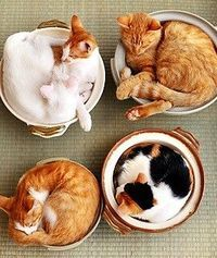 cute Cats.... @ Juxtapost.com