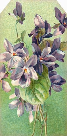 """Garden of the Heart"" ~ purple violets."