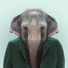 elephant http://www.cuded.com/2013/05/animals-portraits-by-yago-partal/