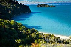 New Zealand, Nelson, Abel Tasman National Park. Lush rainforest fringing Stillwell Bay, viewed while hiking the Coastal Track.