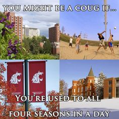 You might be a coug if... you're used to all four seasons in a day.
