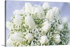 Bouquet of white Tulip (Tulipa sp) flowers and Baby's Breath (Gypsophila sp) easy to diy  Item #1034531