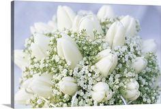 Bouquet of white Tulip (Tulipa sp) flowers and Baby's Breath (Gypsophila sp) easy to diy  Item #1034531