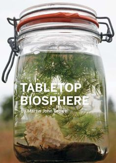 Tabletop biosphere with ghost shrimp and snail. I want to do this with my daughter.