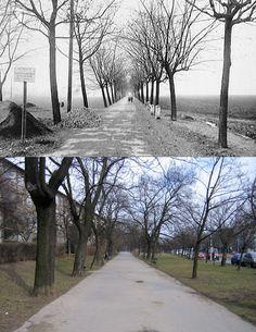 Strašnice, Jiráskova alej, V Olšinách | dříve a dnes | Emil Nádeníček