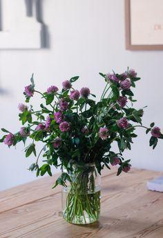 Flower Farm, My Flower, Flower Power, Wild Flowers, Beautiful Flowers, Fall Plants, My New Room, Houseplants, Decoration