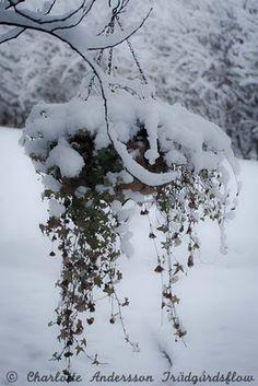 Winter garden pleasure