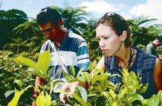 JCU science researchers study how biodiversity conservation can lead to more chocolate