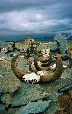 Yak Skulls & Stones in Near Lake Manasarovar, Ngari, Tibet by Matthew Schoenfelder.