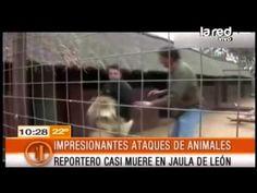 Impresionantes salvadas de ataques animales - YouTube