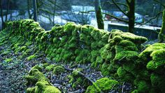 This Re-Engineered Moss Can Grow Perfume--And Even Medicine