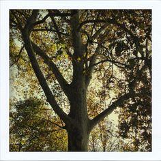 Una giovane quercia al mattino presto