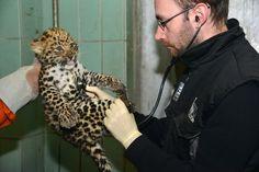 Zoo Veterinarian - Veterinary Specialist