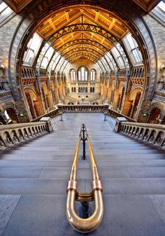 The amazing Natural History Museum, London