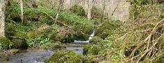 """Das Naturschutzgebiet """"Schönecker Schweiz"""""""