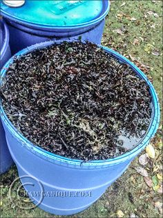 Make your own liquid seaweed fertilizer