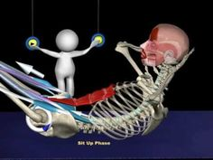 Sit-up / Curl-up Anatomy