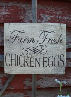Great Fresh Chicken Eggs and Protein – Chicken In The Shadows Best Egg Laying Chickens, Raising Chickens, Chicken Signs, Country Farm, Country Life, Country Living, Fresh Chicken, Chicken Breeds, Farms Living
