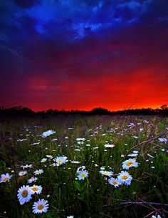 ✯ Rising Daisies by Phil Koch Beautiful Sky, Beautiful World, Beautiful Landscapes, Beautiful Images, Beautiful Flowers, Beautiful Scenery, Beautiful Things, Scenic Photography, Nature Photography