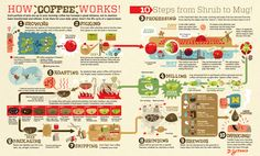 Infographics - How Coffee Works