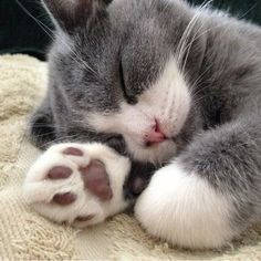Cat nap. GOT AN OBSESSION WITH PAW PADS!!!!