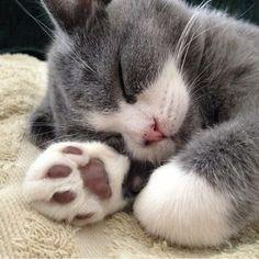Cat nap.