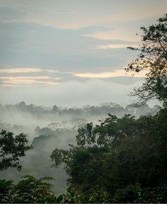 Beautiful misty dawn! Sunrise over the #rainforest : @matteorui! #costaricaexperts #costarica