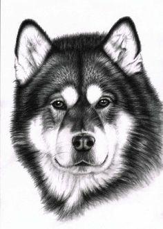 Alaskan Malamute Portrait Kunstdruck A3 von ArtsandDogs auf Etsy, €19.00