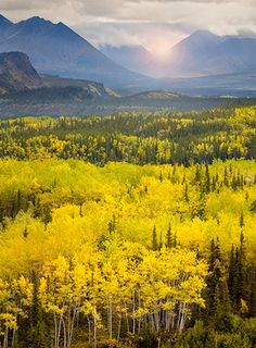 Everyone should see Denali, Alaska at least once in their lifetime.