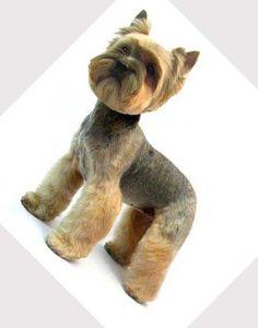 grooming schnauzers yourself | Dog grooming tips: