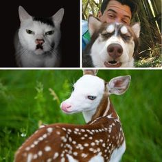 It's not every day you see animals with such unique markings; you won't soon forget these. Funny Dog Videos, Funny Dogs, Cute Dogs, Cute Wild Animals, Funny Animals, Odd Animals, Mickey Mouse, Charlie Chaplin, Animal Humour