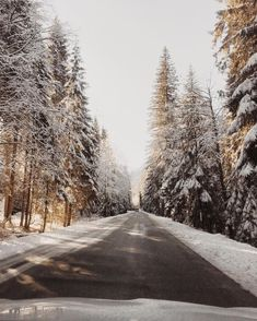 Christmas decor inspiration and ideas for Katharine Dever II Transformation Expert and Business Coach # presents Winter Love, Winter Snow, Winter Christmas, Christmas Decor, Winter Magic, Winter Trees, Xmas, Wallpaper Aesthetic, Life Is A Journey