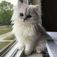 Love white kitty<3